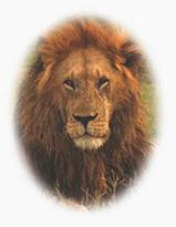 lion-contact